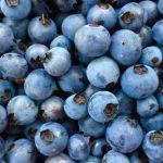 Pesticides : Ottawa veut permettre plus de résidus dans les bleuets sauvages – RADIO-CANADA